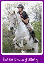 horse photo gallery