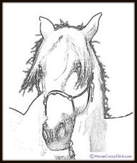 Horse-coloring-book-andalusian