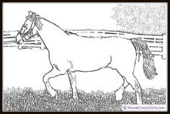 horse-coloring-book-morgan
