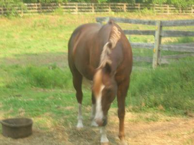 Picture of Bandit the horse