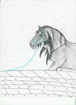 im horsebackrider22 on Deviantart
