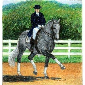 warmblood horses: