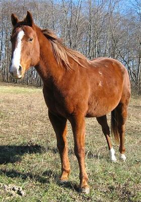 this is my dream horse