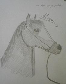 Hero, an arab pony