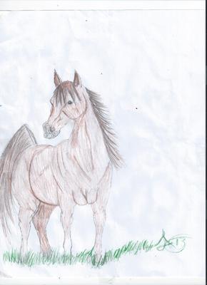 Arabian mare by Aspen