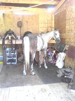 sugar, one of my horses