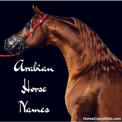 Share your favorite Arabian horse names!