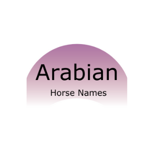 Graphic that says Arabian horse names.