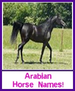 Arabian horse names
