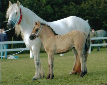 CC my horse and BB the foal -- HorseCrazyGirls.com