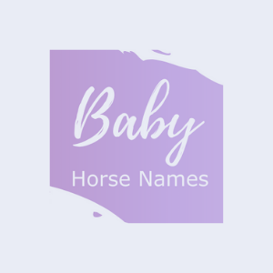 Graphic that says baby horse names.