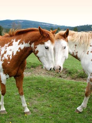 2 horses in love