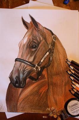 Cavalli Drawing :D