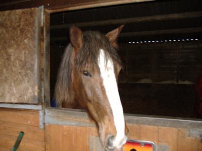 molly my horse
