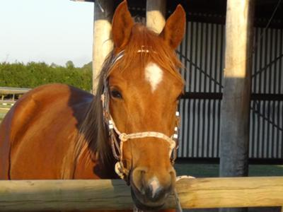 Benji, the crazy and amazing horse I ride at my stables