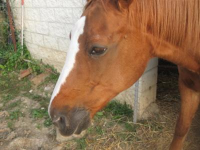 My horse Penny