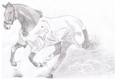 Drawings of horses galloping