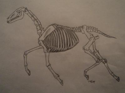 skeletonal horse - Pictures Of Halloween Drawings