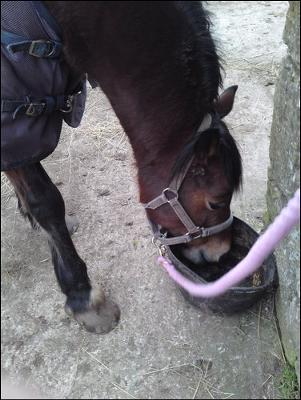 Marsha xx carlas horse