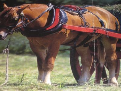 Horse Pulling A Cart