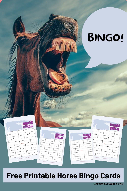 Free horse bingo game