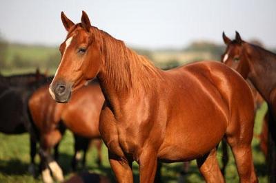 my fav horse.