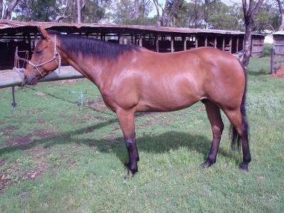 SHILO horse pic..!