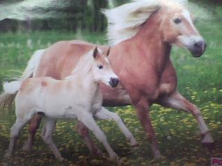 I lovee foals!
