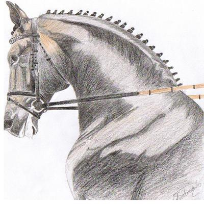 Pencil drawings and page has been likened All lookenglish riding apparel li