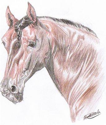 Horse Drawings By Spirit Part 1