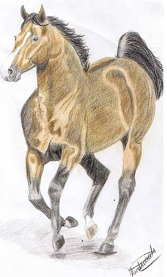thoroughbred stallion cantering