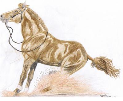 western reining horse