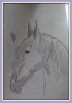 A pencil drawing of a horse head.
