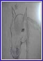 A horse head drawn in pencil.