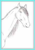 A pencil horse head drawing.