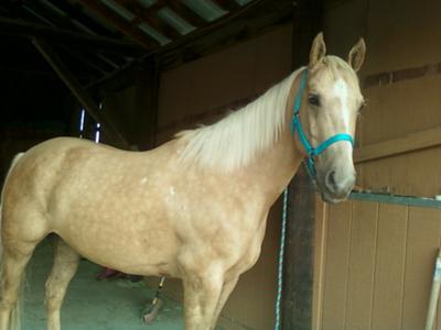 My horse Comet<3