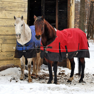 Two horses in the snow with blankets on