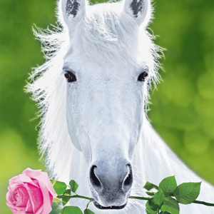 A picture of a white horse holding a pink rose in its mouth.