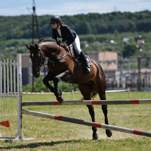 Horse jumping with a rider