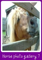 horse photo gallery
