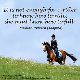 Horse Pictures  Quotes on Horse Quotes