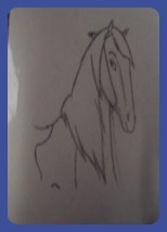 A pencil drawing of a paint horse head and shoulder.
