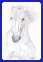 A pencil drawing of a grey Andalusian horse head.