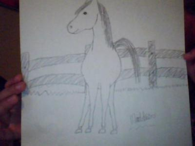 Horse from the front pencil on paper