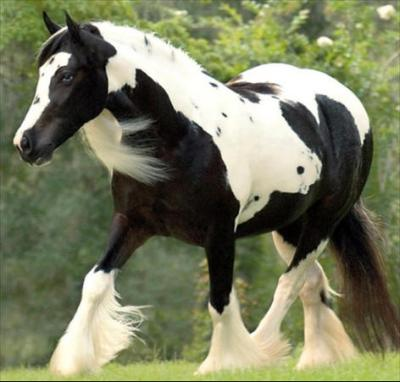 Regal Elegance in her pasture.