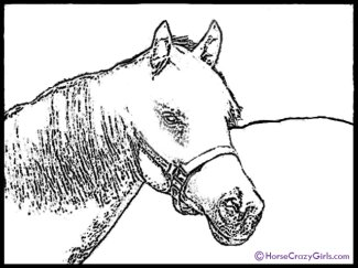 horse-coloring-2