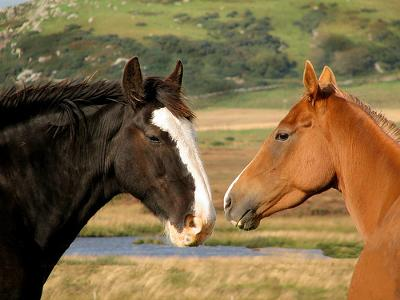horses free