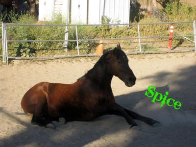 This is my horse, Spice