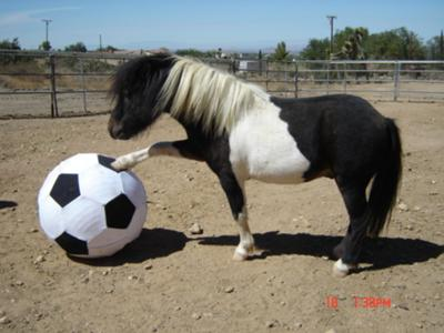A Mini Horse 2.jpg