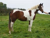 My dream horse! (Pippen)